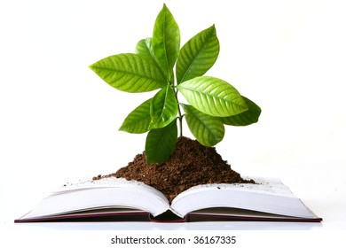 a green plant growth from book