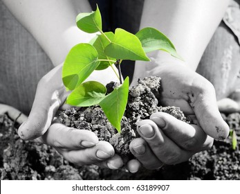 Green plant in the hand