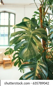 Green plant indoors