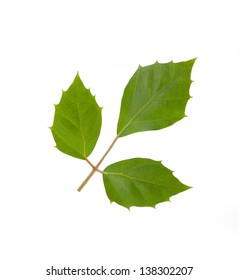 green plant leaf, isolated on white