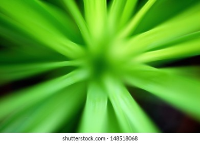 green plant with leafs like rays