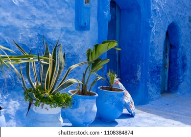 Green plant lined against a blue wall in Chefchaouen, Morocco