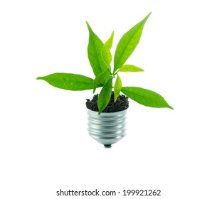 Green plant new life on lamp out of a bulb, green energy concept on over white background