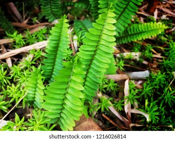 green plant nuture