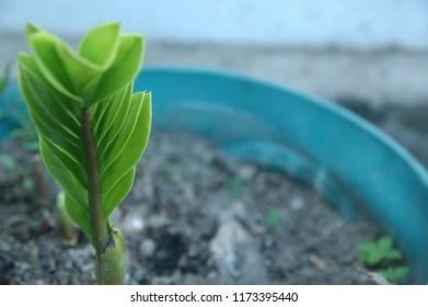 Green plant on blur background