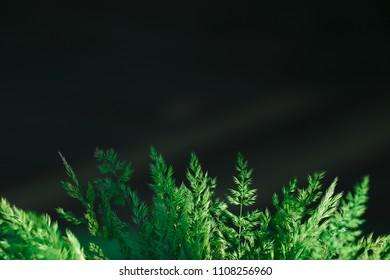 Green plant on the dark background. Freshness and lightness.