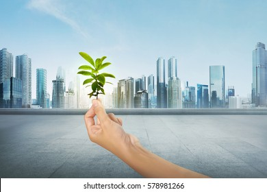 Green plant on human hand on modern city background