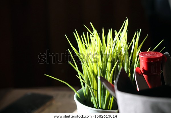 Green plant on table in sunlight