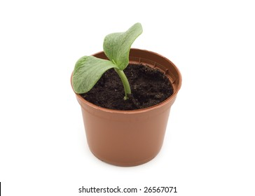Green plant in a peat pot on a white background