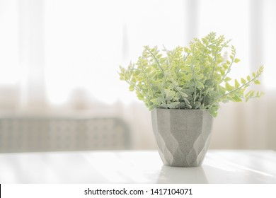 Green plant in pot on table