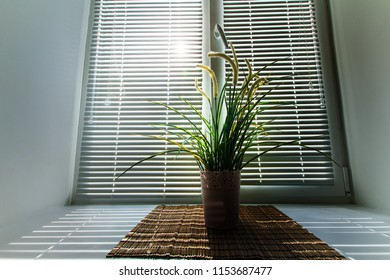 green plant in a pot on the windowsill in the sun, blinds on the windows