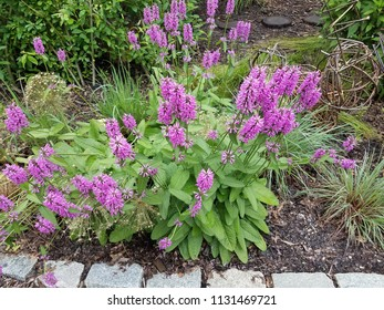 green plant with purple flowers