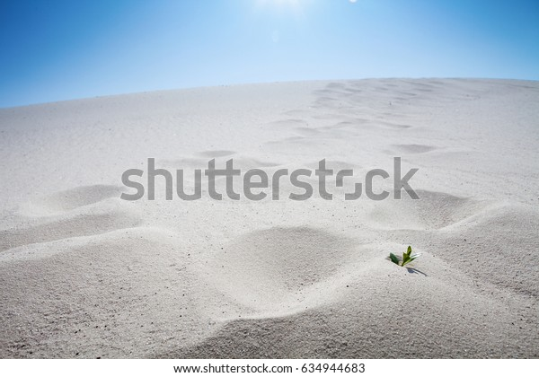 green plant in sand close-up
