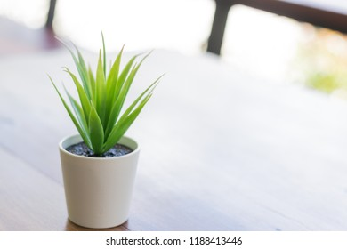 Green plant in a small pot put on a free table