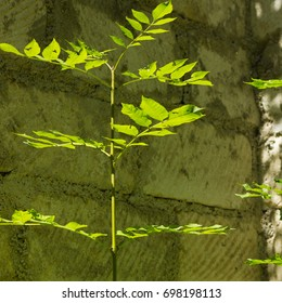 Green plant, stone wall on background