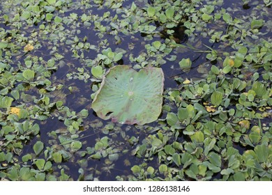 green plant in the water