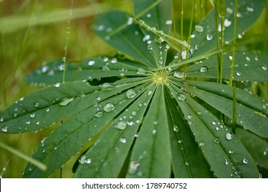 Green plant with water drops