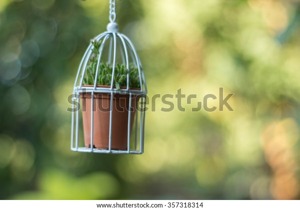 Green plant in white birdcage with bokeh background