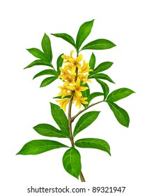 Green plant with yellow flowers