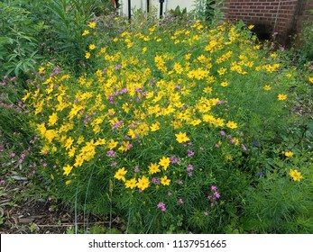 green plant with yellow and pink flowers