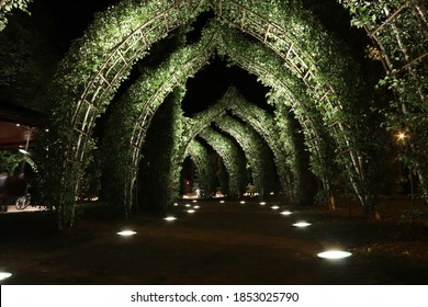 Green plants arches through the path at night with illumination