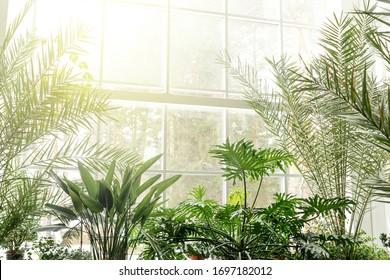 Green plants in botanical garden indoor. Sunshine in panoramic window. Fresh natural background.