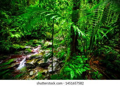 Green plants by a small stream in Basse Terre jungle in Guadeloupe. Lesser Antilles, Caribbean sea