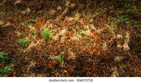 Green Plants Covered With Dry fallen leaves.