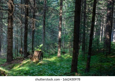 Green plants in the forest of Austria