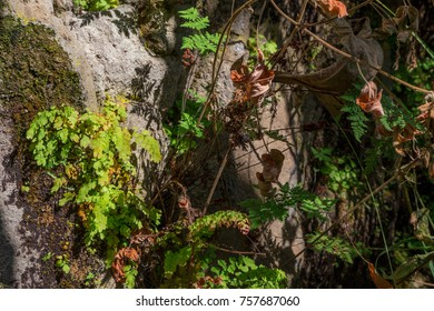 Green plants in forest in fall season at day
