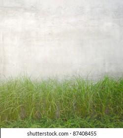 Green Plants Growing Near Grey Concrete Wall