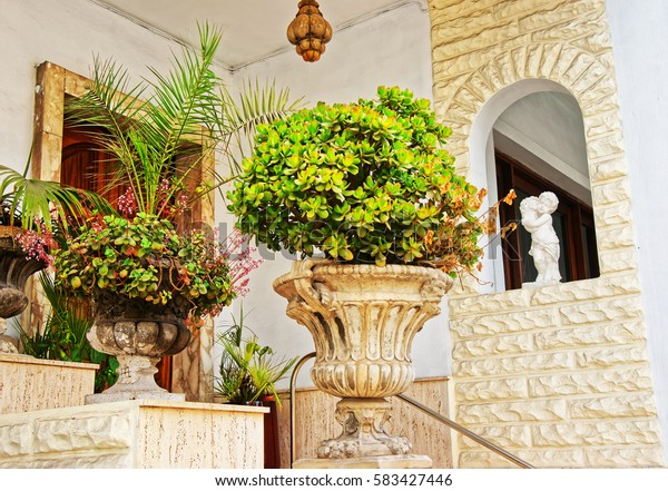 Green plants at the house stairs at Mgarr old town, Malta island