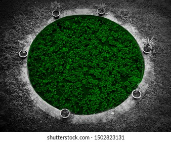 Green plants inside a round shape concrete structures photo