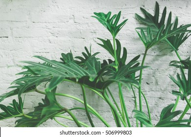 Green plants leaf on white wall background vintage color