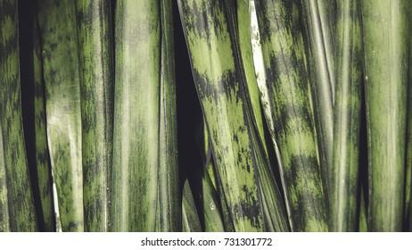 Green plants, macro flowers