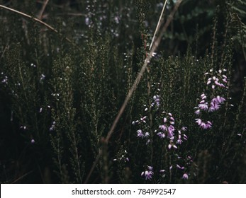 Green plants in moody nature environment