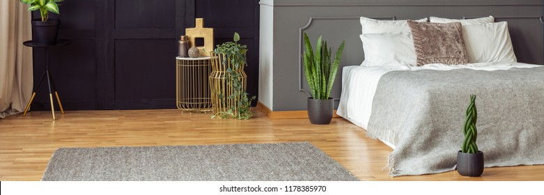 Green plants on golden stands in a spacious bedroom interior with rug on hardwood floor and black and gray walls