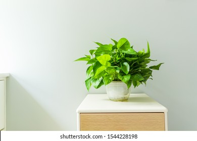 Green plants on the indoor coffee table - Shutterstock ID 1544228198