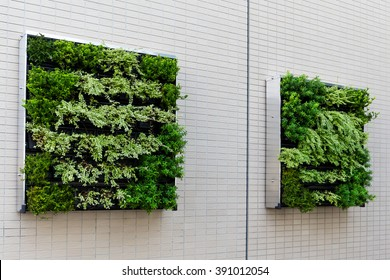 Green plants on the wall for decoration