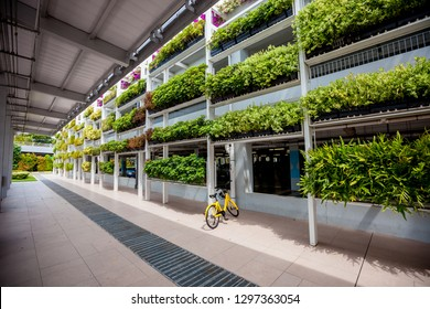Green plants on the walls in Singapore