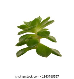 Green plants on white background.