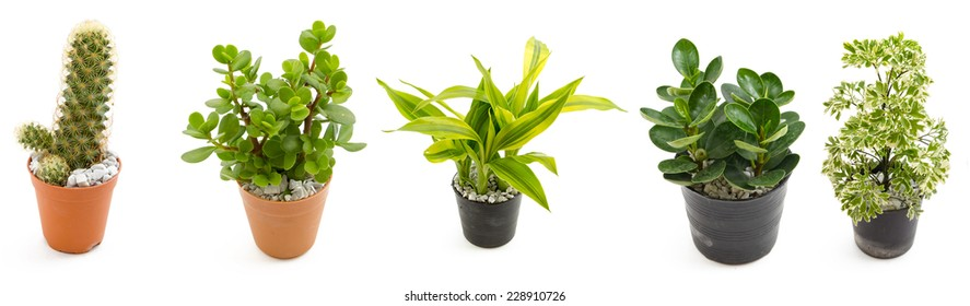 green plants in the small pots isolated on white background