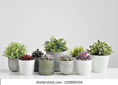 Green plants, succulents, in cement concrete pots stand in a row on a white background. The concept of a flower shop, gifts for women and the protection of nature, close-up.