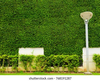 green plants of wall nature and white concrete and lantern pilla in the garden