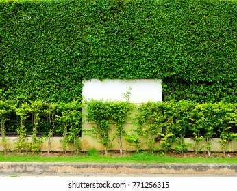 green plants of wall nature and white concrete in the garden