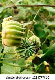Green plants walpaper
