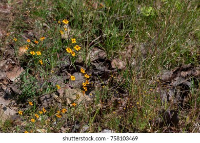 Green plants and yellow flowers in forest surrounded by fallen brown leaves in fall season