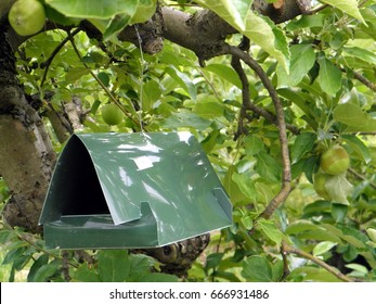 Green plastic delta trap is used in orchards for catching pests - especially moths, which cause damage to the fruits.