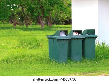 Green plastic recycling bin in garden.