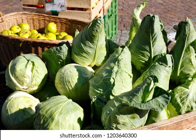Green pointed cabbage and white cabbage cabbage in a large wicker basket